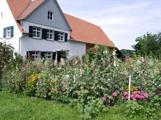 hollyhocks, cottage garden, bauerngarten,