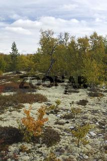 autumn landscape, herbstlandschaft, rondane national park, oppland, norwegen, norway, nordeuropa, north europe,