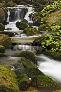kleine ohe,  brook, creek, bach, np bavarian forest, bayrischer wald, bayner, bavaria, germany, deutschland,