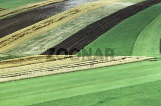 felder, fields, monokultur, landwirtschaft, agriculture, Deutschland, germany