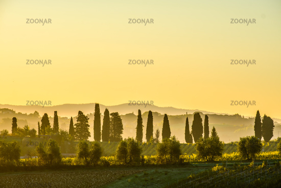 Dawn at  Tuscany Vineyard