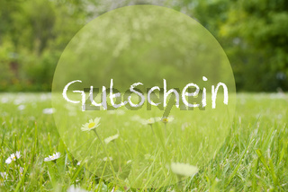 Gras Meadow, Daisy Flowers, Gutschein Means Voucher