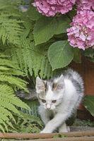 28/5000 Kitten with hydrangea blossom