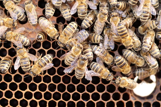 some bees are building