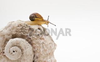 Schnecke mit Schneckenhaus snail with shell