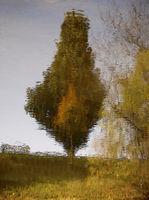 Monet's River