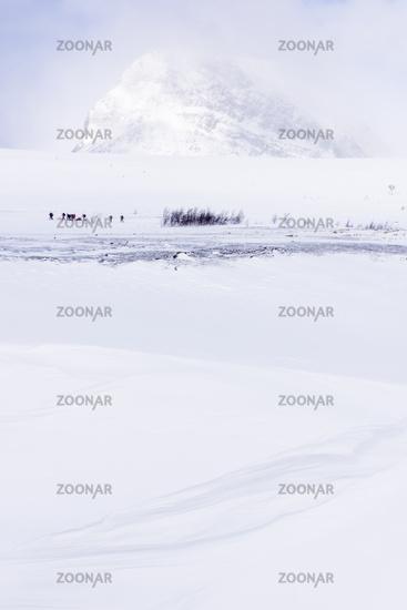 Skiers on tour in snow drift, Stuor Reaiddavaggi, Lapland, Sweden