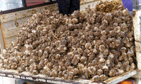 Truck, fully loaded with garlic, in front of the market in Nevsehir, Anatolia, Turkey