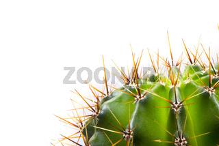 green cactus, macro shot