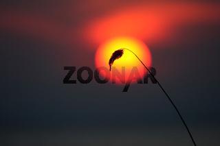 Sonnenuntergang Achterwasser Usedom