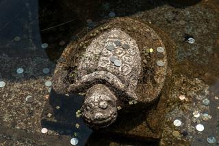 Korea pond turtle statue of coins