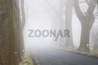 Landstraße, Dichter Nebel