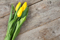 Yellow tulips on old wooden background