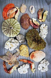 Sea treasures