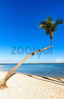Palm Ocean Sky