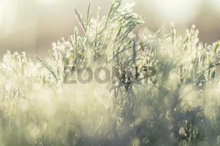 Morning dew on green grass at the natural morning sunlight. Abstract fresh, green grass background with blurred bokeh lights effect. Water drops close up