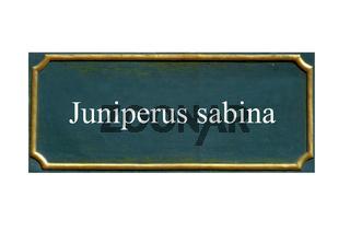 schild Sadebaum,Stinkwacholder,unechter Wacholder,Juniperus sabina