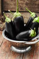 Summer crop of aubergine