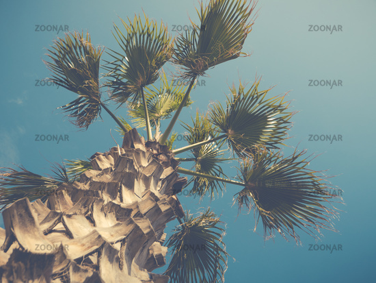 VIntage Style Palm Tree WIth Trunk