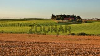 Idyllic rural landscape in Jylland, Denmark. Beautiful shaped fields and hills. Summer scene.