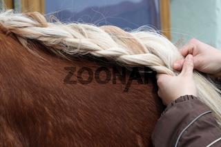 Pferdezopf