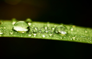 Rain drops on grass leaf at autumn season