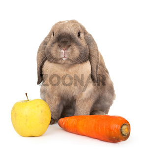 Dwarf rabbit with carrots and apple.