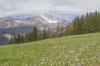 spring in the Carnic Alps