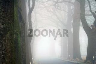 Baumallee mit Landstrasse im Nebel