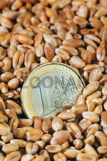Getreidekörner vom Weizen
