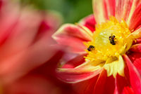 Bees looking for nectar