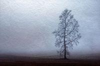 Tree in fog on field