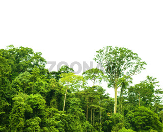 Tropical rainforest landscape isolated