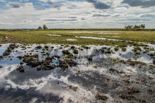 Feuchtwiese auf dem Darss, (Halbinsel Fischland-Darss-Zingst, Mecklenburg-Vorpommern)