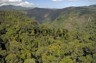 Blick über Primärregenwald, Nordqueensland, Australien
