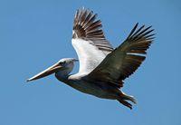 Bird flying high