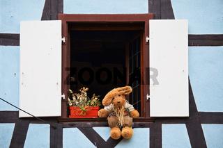 Baer auf Fensterbank
