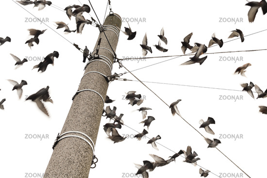 Stadttauben auf einem Masten / city doves on a masts