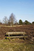 Schneverdingen - Bank in a heath landscape