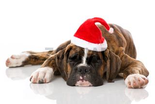 Welpe mit Weihnachtsmütze