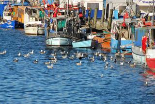 Wasser,Fischerei,Fischerboote,Warnemünde,Alter Strom,Möven,Rostock,