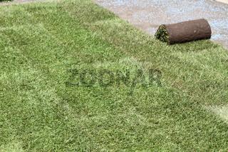 Rollrasen im Garten verlegen