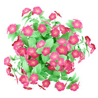 top view of red hibiscus flowers isolated on white background