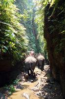 Working elephant, Myanmar