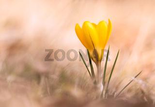Frühlingsaquarell