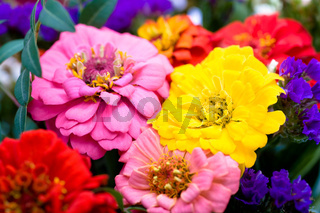 bunch of zinnias