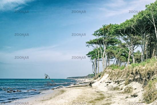 Western beach on the peninsula Darss at Mecklenburg- Western Pomerania, Germany