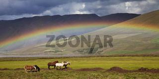IS_Regenbogen_Pferde_04.tif