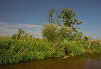 Riverbank in summertime under blue sky