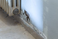 Moisture damage in a wall